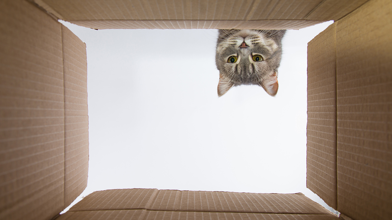 Picture of a lost cat in a box